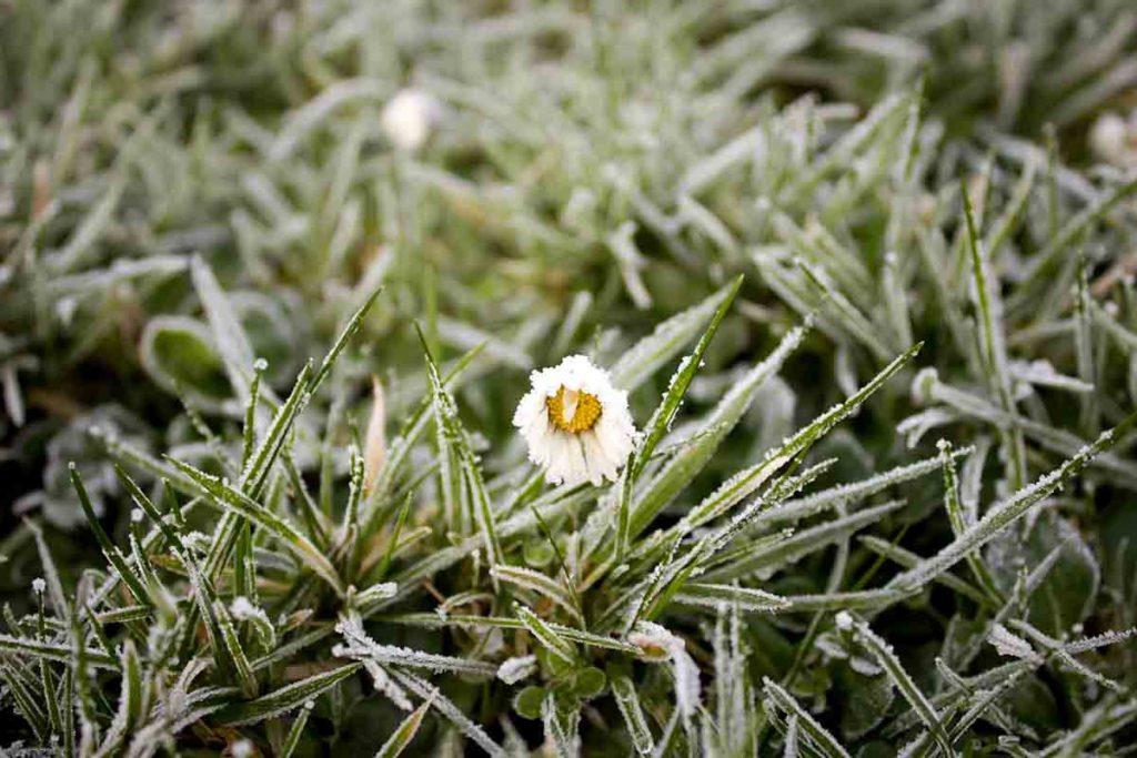 cómo cuidar jardín en invierno