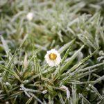 5 consejos que debes seguir para el cuidado de tu jardín en invierno